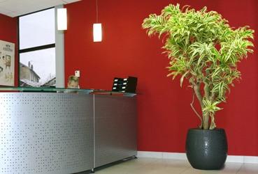plantes-en-pot-home-vegetal