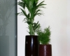 home-vegetal-plantes-en-pot-01