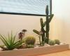 jardins intérieur home végétal pour entreprise 03