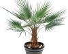 plantes-artificielles-home-vegetal-washintonia-120-cm