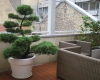 terrasses-et-balcons-home-vegetal-02