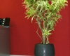 home-vegetal-plantes-en-pot-13