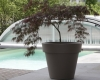 home-vegetal-plantes-en-pot-14