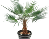 location-plantes-home-vegetal-8
